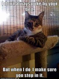 Cat Pic Meme - best cat memes modern cat