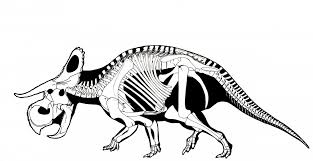 a new dinosaur has been discovered business insider