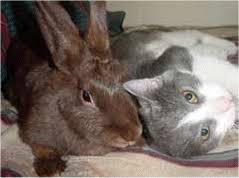 """Résultat de recherche d'images pour """"images gif petits lapins"""""""