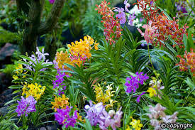 Orchids Facts by National Orchid Garden In Singapore Singapore Attractions
