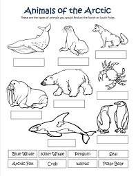 arctic animals coloring pages for preschoolers funny coloring
