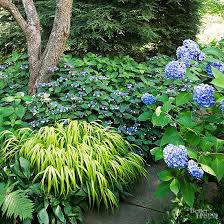 Our Favorite Plants How To by What Plants Go Together Pairing Plants By Color Season Of Bloom