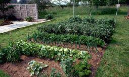 Fall Vegetable Garden Ideas by Small Vegetable Garden Gardening Ideas