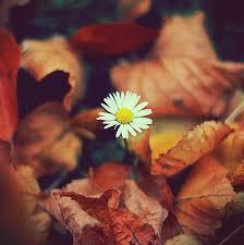 Autumn Flower 1652 Best