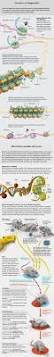 top 25 best molecular biology ideas on pinterest what are