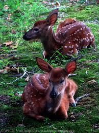 West Virginia wild animals images Graceful wild animal best blog wild animals that live in west jpg