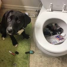 Plumbing Meme - emergency drain service available manchester plumbers
