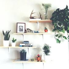 best plants for bedroom plants to put in bedroom best plant shelves ideas on plant wall