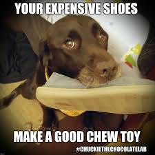 I Make Shoes Meme - your expensive shoes make a good chew toy imgflip