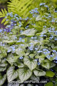 141 best in my 5b garden perennials images on pinterest