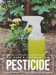 Homemade Pesticide For Vegetable Garden by Herb And Essential Oil Pesticide Diy Hello Nature