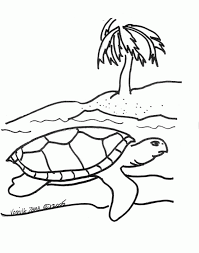 sea turtle outline kids coloring