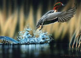 200 best photography images on pinterest wildlife photography