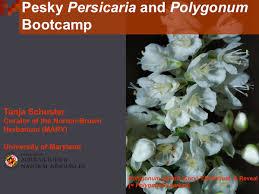 maryland native plant society 251 jpg