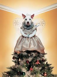 christmas dogs raggle and paddy in bark the herald angels sing