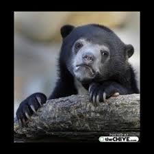 sad bear meme generator
