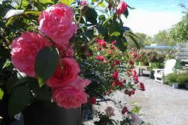 Flower Shops by Plant Is Botanical Garden Wikipedia Botanical Plant Shops Near Me