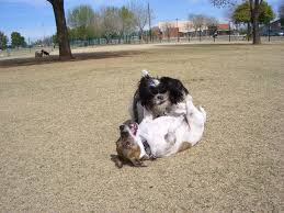 australian shepherd jobs traveling with a pet can i bring