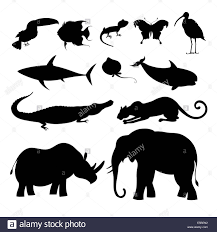 beautiful black silhouettes of various animals on white background