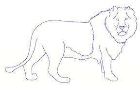 draw lion draw step step