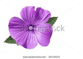 purple flowers purple flowers stock images royalty free images vectors