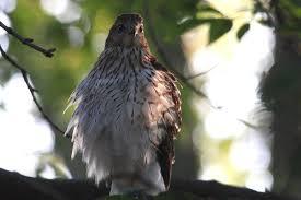 t o backyard on the move bird canada