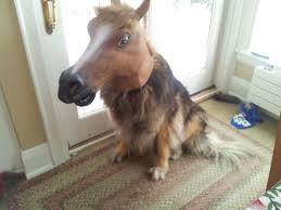 Horse Head Mask Meme - the 15 funny collection of dorse dogs with horse mask bajiroo com