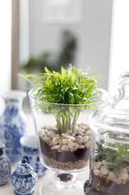 sweet viburnum 200mm pot viburnum 283 best garden images on pinterest gardening garden ideas and