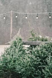 shopper u0027s diary a christmas tree farm in maine wonderful time