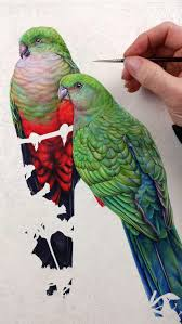 king parrots and poinciana a painting in watercolour heidi
