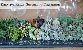succulent terrarium diy hometalk