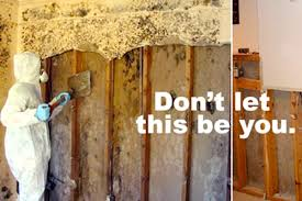 staggering how to get rid of mold in basement do you black a