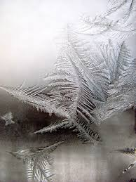 free images tree branch snow wing leaf window frost ice