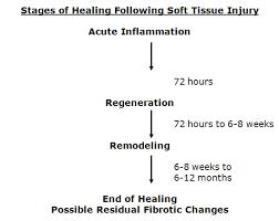 the healing of injured tissues