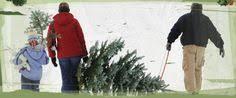 Helms Christmas Tree Farm - helms christmas tree farm nc choose u0026 cut christmas trees