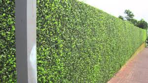 Garden Hedges Types Decorating Landscaping Ideas With Privet Hedge Plants