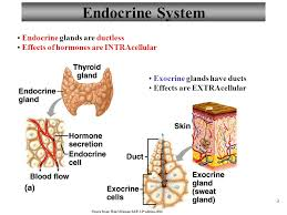 Human Anatomy And Physiology Marieb Hoehn Chapter 16 Endocrine System Lecture 13 Part 1 Overview And Types