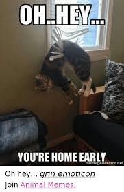 Emoticon Memes - 25 best memes about animal meme animal memes