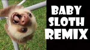 Angry Sloth Meme - screaming baby sloth remix compilation youtube