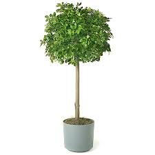 Topiary Outdoor Decorating Citrus Artificial Topiary Trees With Pot