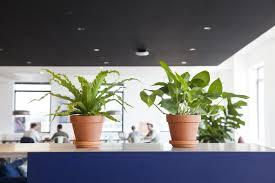 Plants For Office Plants For Office Desk Otbsiu Com
