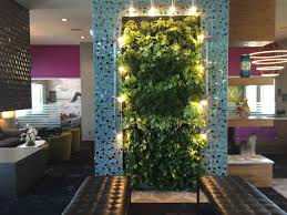 city plantscaping denver office plants interior plant service wall