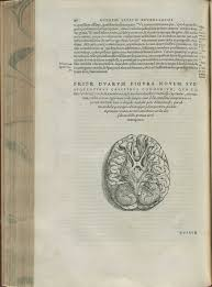 Gross Anatomy Of The Brain And Cranial Nerves Pdf Developing The Brain U2014early Illustrations Of Cerebral Cortex And