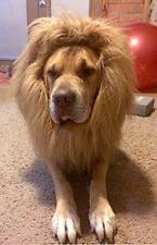 Dog Halloween Costume Lion Mane Dog Lion Costume Ebay