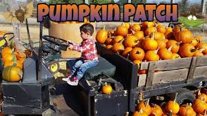 excavator halloween costume pumpkin hunting a visit to the pumpkin patch squashtractor