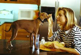 toxic and dangerous foods your dog should never eat