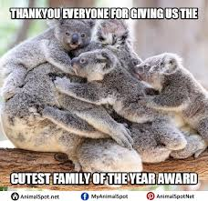 Angry Koala Meme - cute koala memes png
