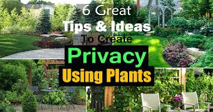 Tree Ideas For Backyard Privacy Landscaping Ideas Landscape Privacy Trees Backyard