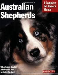 life with australian shepherd 1000 images about dog life on pinterest vests coyotes and redline