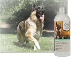 belgian shepherd skin problems ultracruz canine oatmeal shampoo for dogs santa cruz animal health